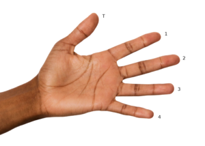 Photo of the left hand, palm out, fingers apart. T is for thumb. The other fingers are numbered from the index (1) to the pinky (4).