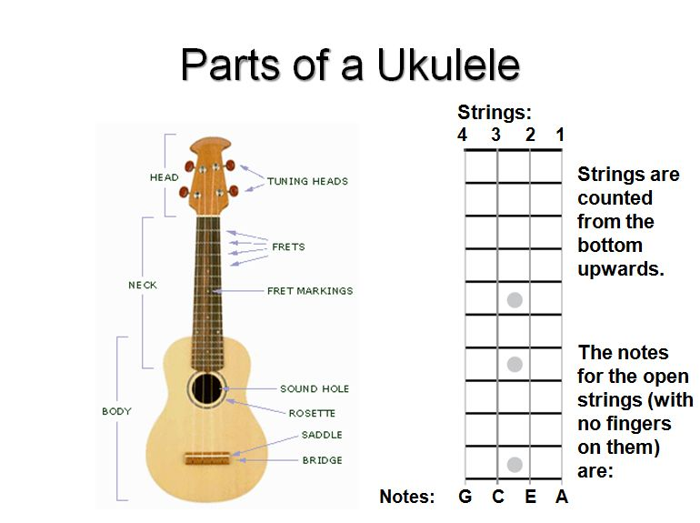 photo of ukulele with all parts labelled and additional chart showing string names and numbers
